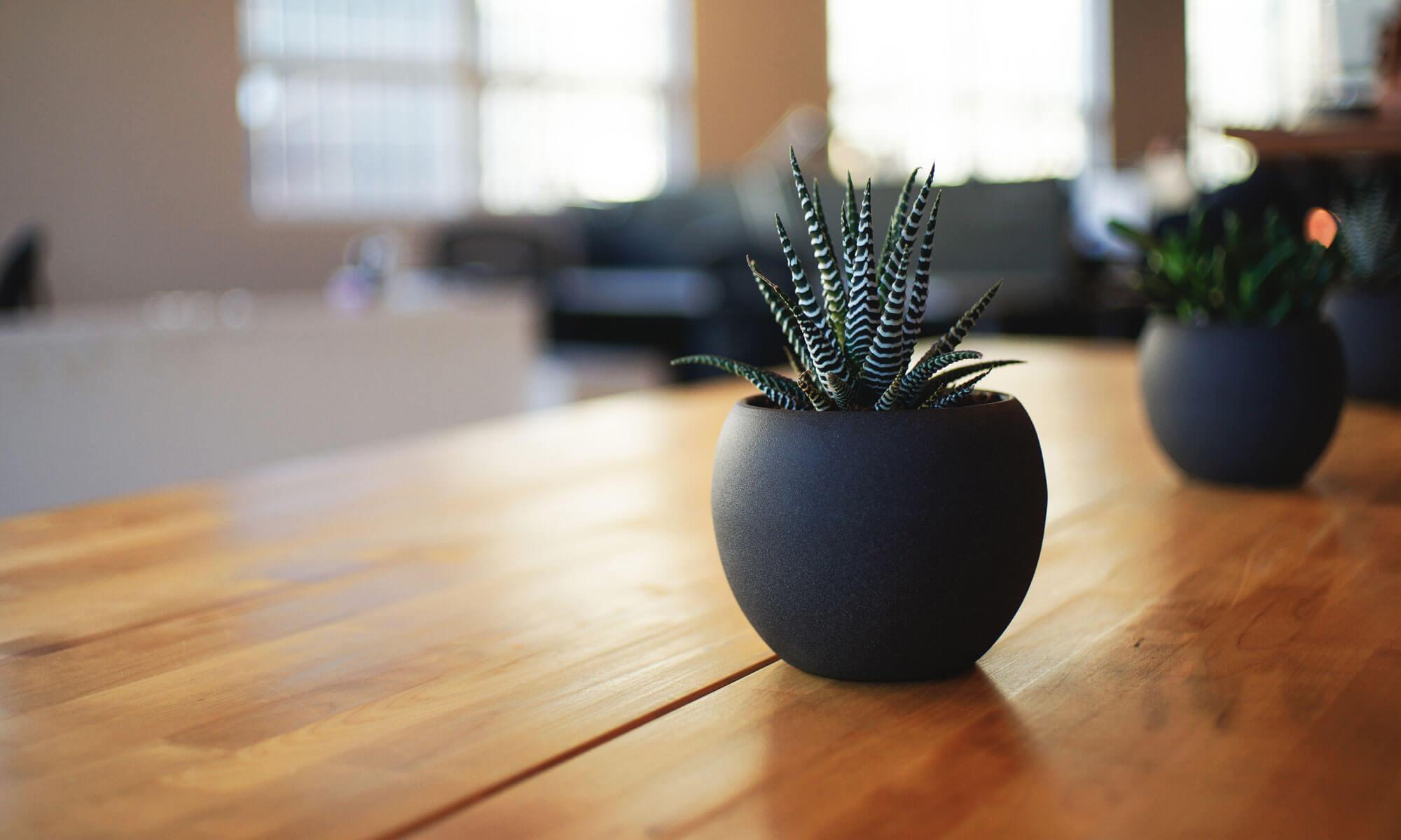 Atilia - Hanfpflanzen
